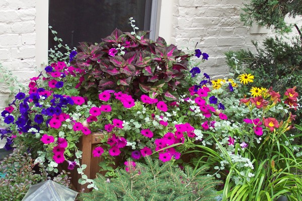 entretenir des fleurs annuelles jardinage blog. Black Bedroom Furniture Sets. Home Design Ideas