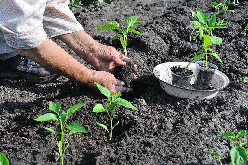 Les plantations de l 39 automne jardinage blog for Plantation jardin