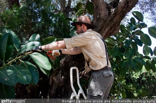 Quelles tudes pour travailler dans les espaces verts for Jardinier paysagiste versailles