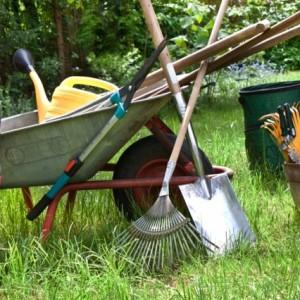 L gumes du potager des id es pour les cuisiner - Quels outils pour jardiner ...