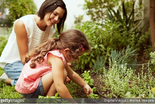 Jardinage raisonn avoir des auxiliaires dans son jardin - Avoir des poules dans son jardin ...
