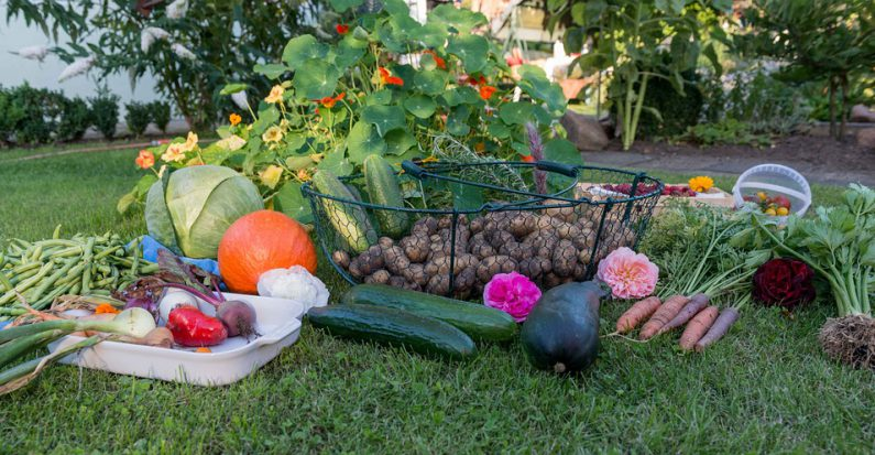 conseils d butant cr er un potager dans son jardin jardinage blog. Black Bedroom Furniture Sets. Home Design Ideas