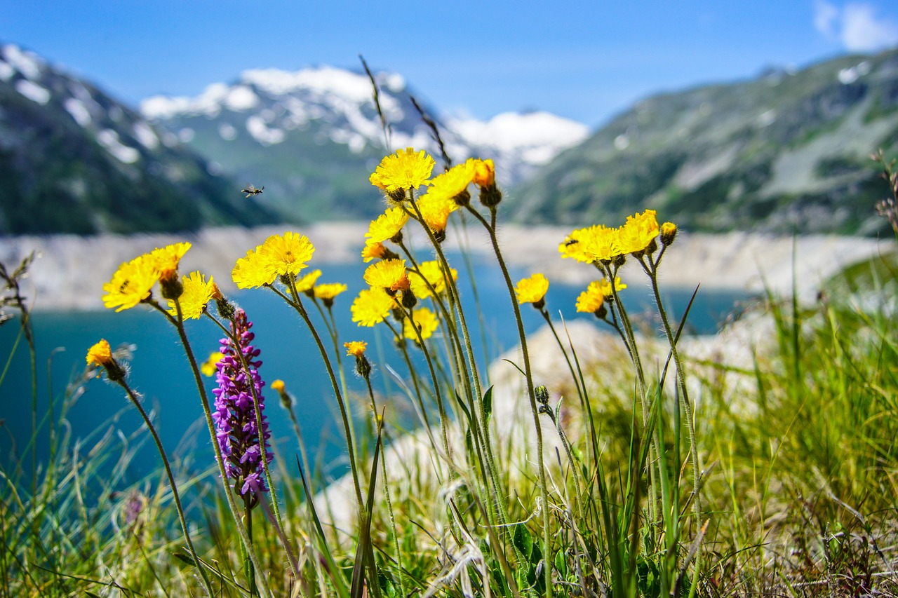 gros plan sur fleurs de montagne avec montagne et lac en arrière plan