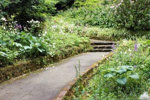 Allée d'un petit jardin à l'abandon