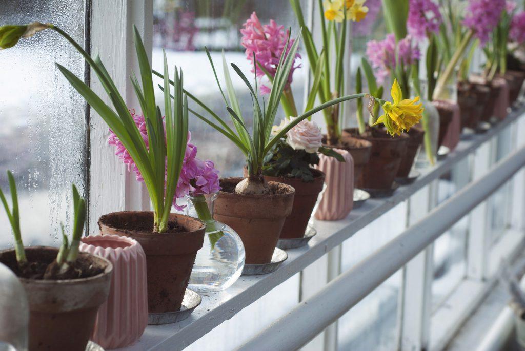 Des pots de fleurs dans une véranda