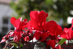 jardiniere-exemple