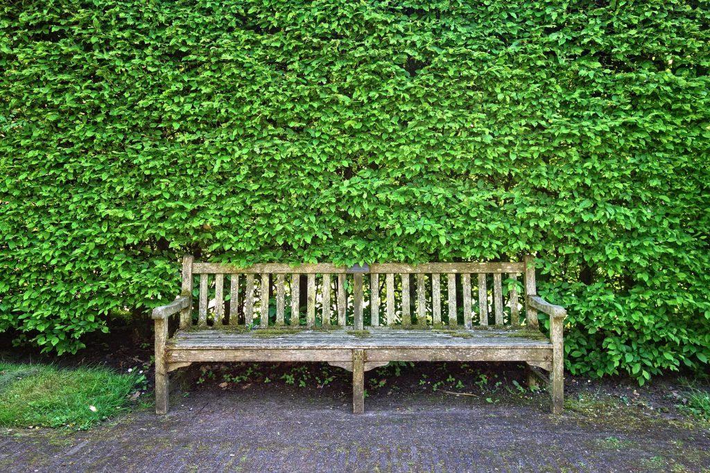 Un vieux banc en bois devant un haie de jardin