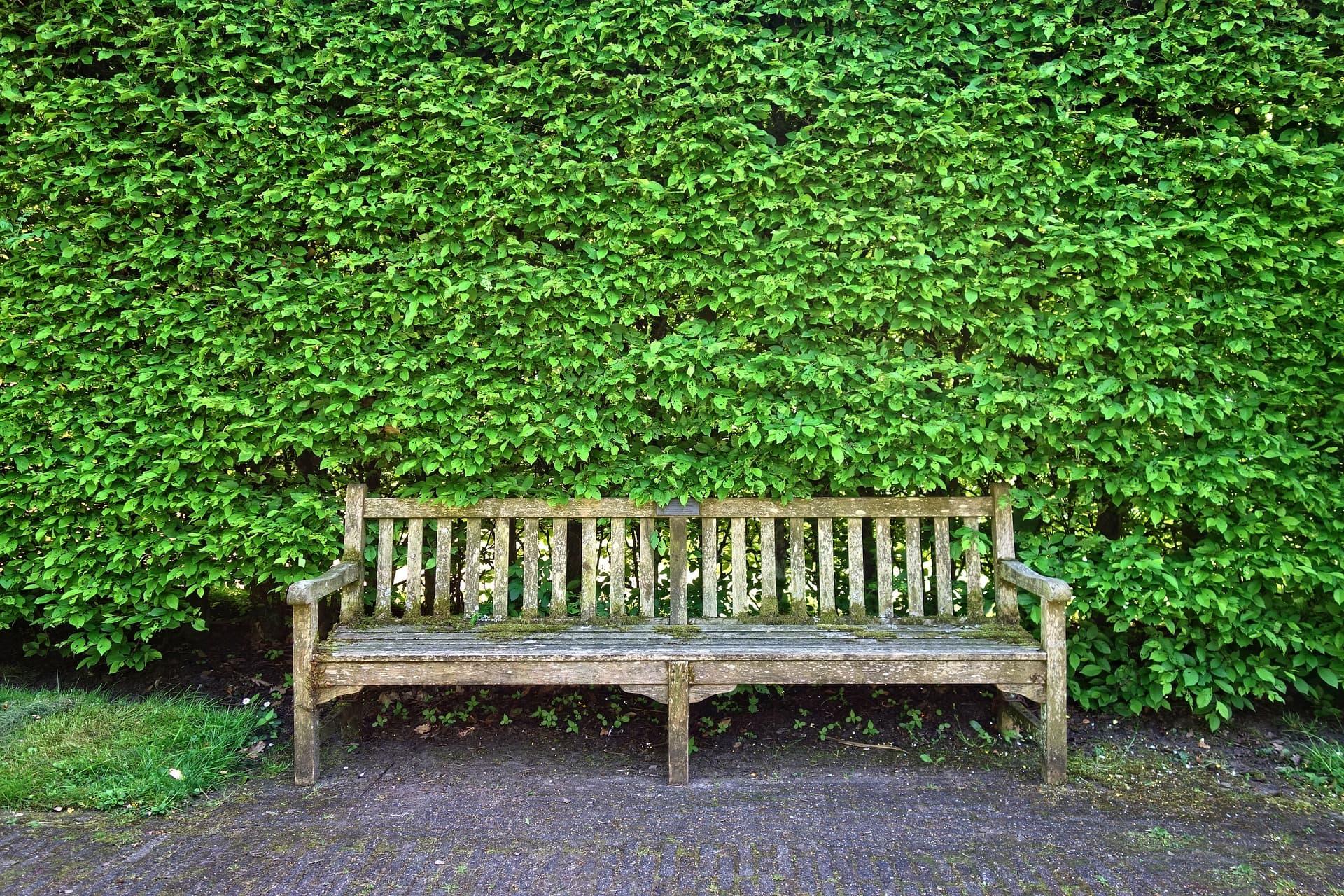 Vieux Banc De Jardin 3 manières de protéger son jardin du regard des voisins