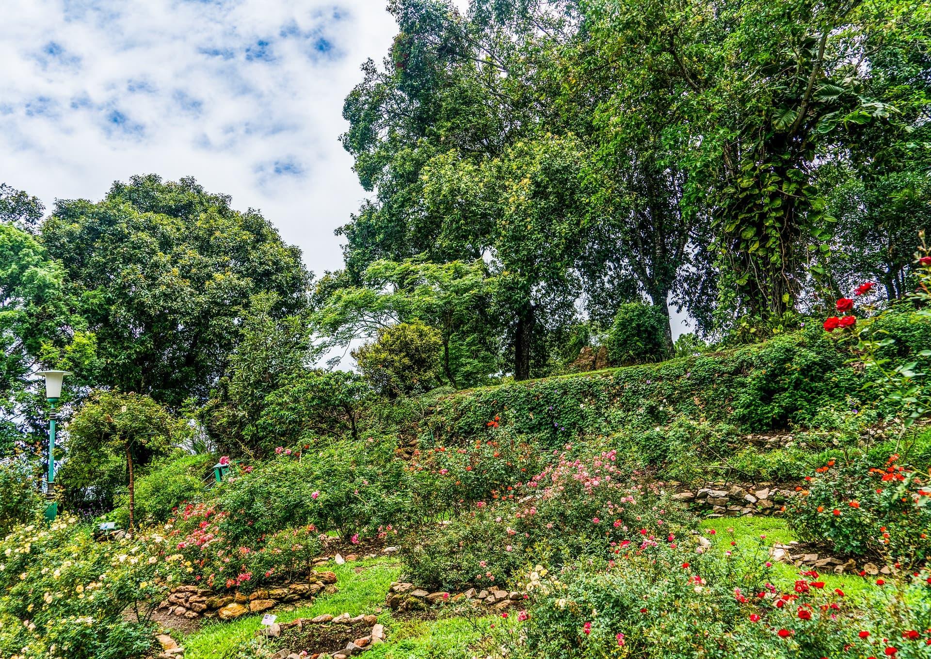 Un jardin de rose sur une colline